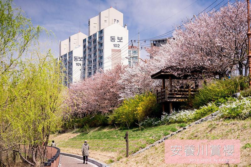 [Seoul。櫻花] 安養川안양천 (2015/04/13)